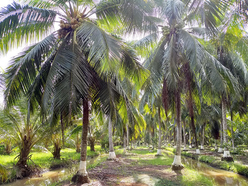 Coconut bowl in Vietnam Organic and Friendly Environment