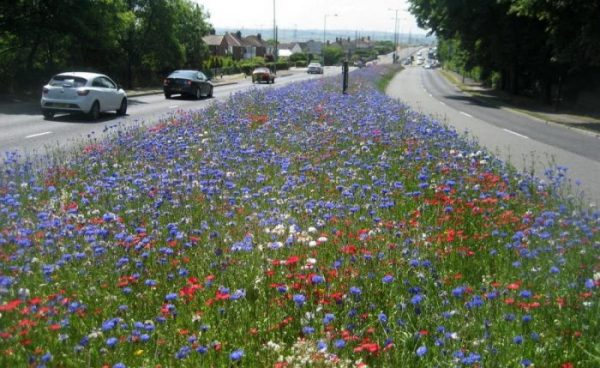 Wildflower meadows on the road for biodiversity great project