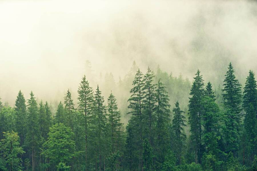 Plant Trees To Protect Our Planet